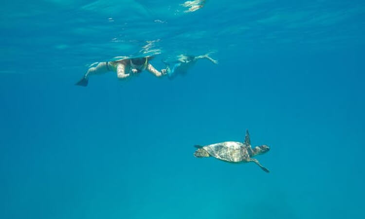 Honolulu Sail and Snorkel with Turtles2