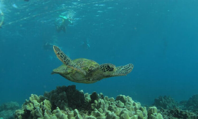 Honolulu Sail and Snorkel with Turtles3