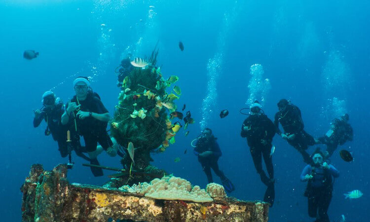 Shallow Reef Dives and Introductory Dives3