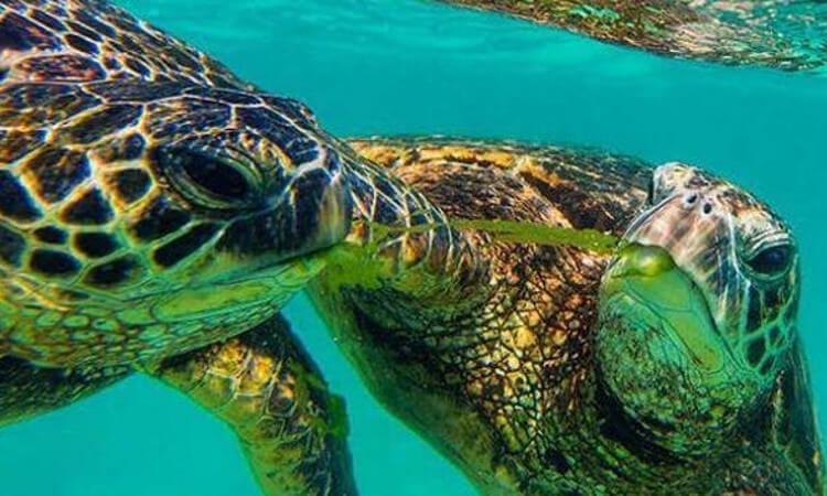 Waikiki's Turtle Canyon Snorkeling & Lunch Sail2